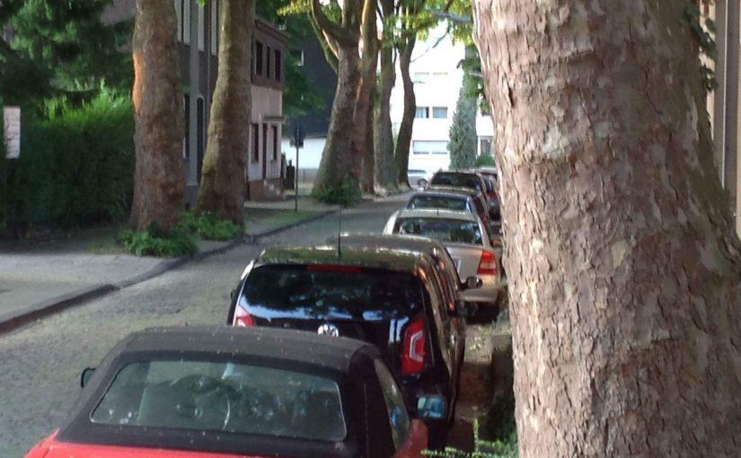 AfD gegen Kahlschlag von Bäumen